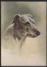 Tobacco Cigarette card postcard deerhound dogs 1930's